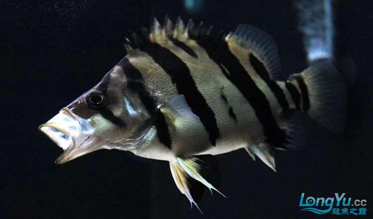 太原市水族饲料厂家养鱼人还记得那些年的四神兽的混养吗 太原观赏鱼 太原龙鱼第2张