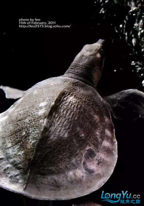 太原市水族饲料厂家养鱼人还记得那些年的四神兽的混养吗 太原观赏鱼 太原龙鱼第3张
