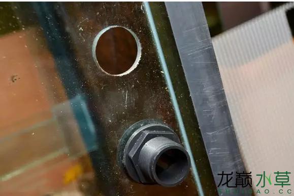 为了给箭毒蛙盖房子也是不容易啊 郑州龙鱼论坛 郑州龙鱼第6张