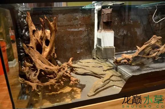 为了给箭毒蛙盖房子也是不容易啊 郑州龙鱼论坛 郑州龙鱼第14张