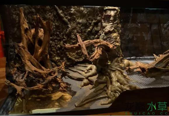为了给箭毒蛙盖房子也是不容易啊 郑州龙鱼论坛 郑州龙鱼第16张