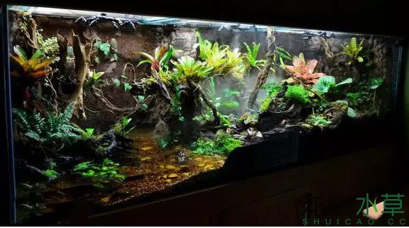 为了给箭毒蛙盖房子也是不容易啊 郑州龙鱼论坛 郑州龙鱼第30张