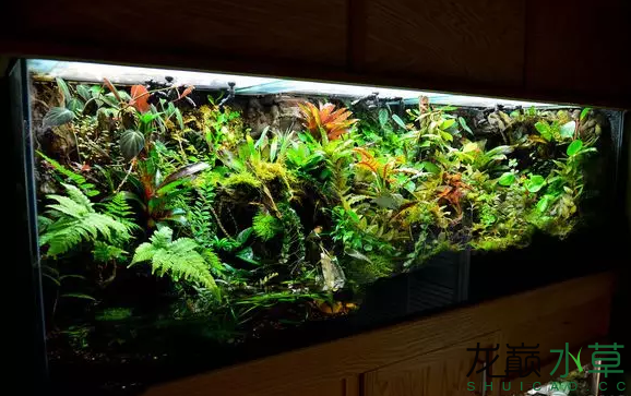 为了给箭毒蛙盖房子也是不容易啊 郑州龙鱼论坛 郑州龙鱼第37张