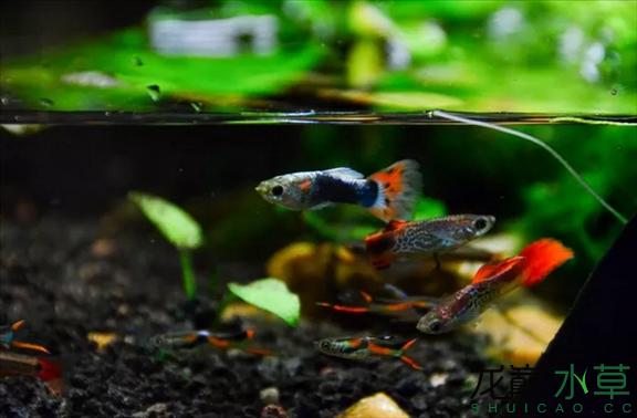为了给箭毒蛙盖房子也是不容易啊 郑州龙鱼论坛 郑州龙鱼第43张
