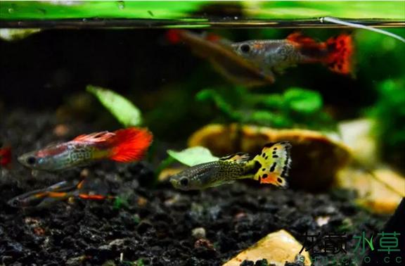 为了给箭毒蛙盖房子也是不容易啊 郑州龙鱼论坛 郑州龙鱼第44张
