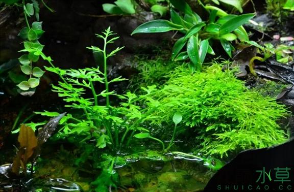为了给箭毒蛙盖房子也是不容易啊 郑州龙鱼论坛 郑州龙鱼第45张