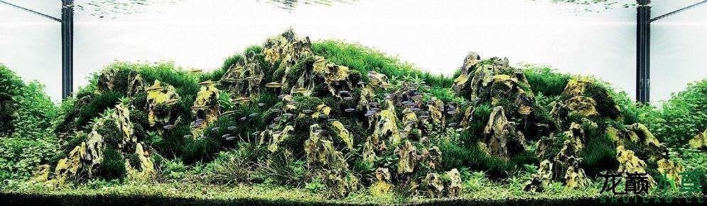 松皮石L02.jpg