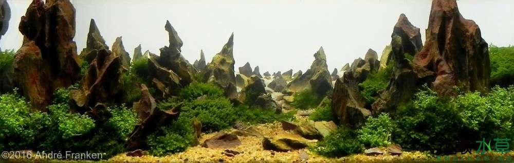 松皮石M10.jpg