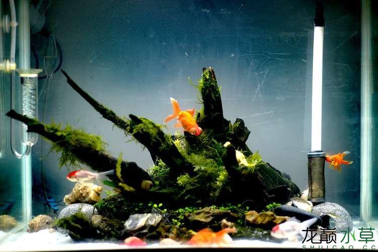 金鱼缸1.jpg