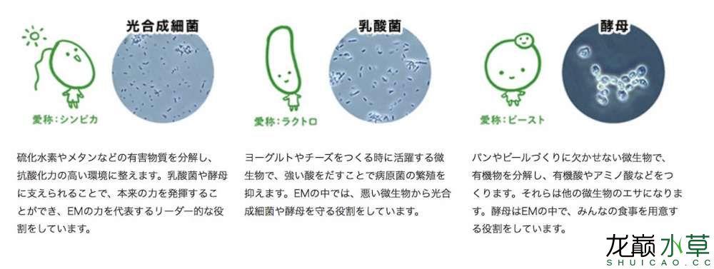 有益菌.jpg