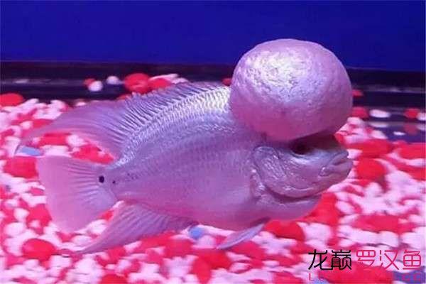 清洗滤材必须注意的细节 天津观赏鱼 天津龙鱼第1张