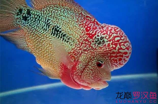 清洗滤材必须注意的细节 天津观赏鱼 天津龙鱼第4张