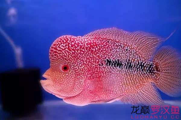 清洗滤材必须注意的细节 天津观赏鱼 天津龙鱼第5张