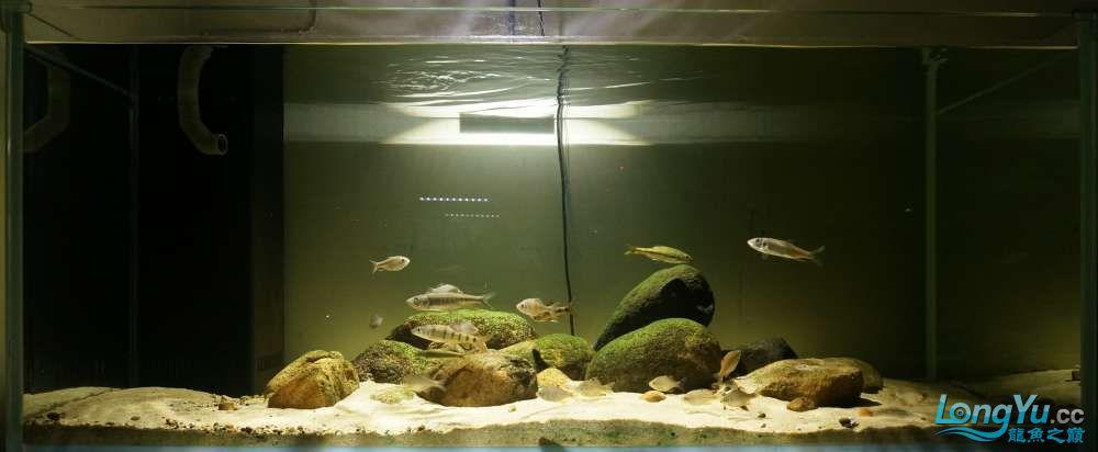 近期鱼缸照片更新