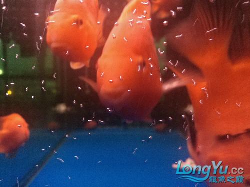 这可西宁小桥热带鱼专卖不是蛋白虫