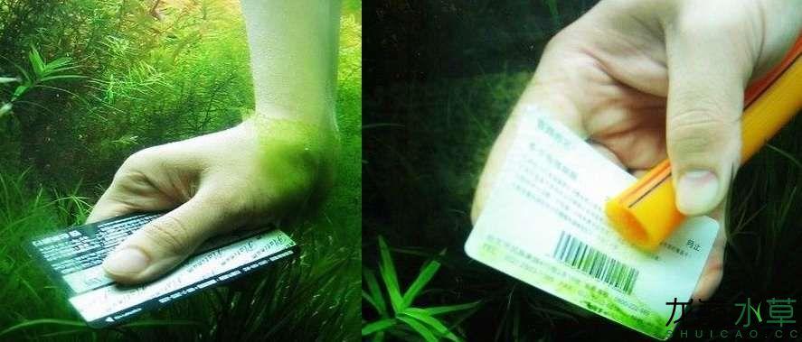 手动刮藻.jpg