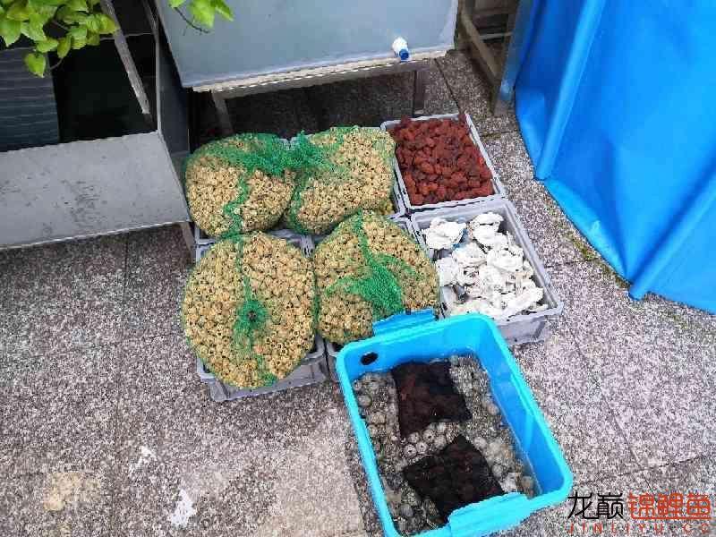 最后的折腾:滴滤 杭州水族批发市场 杭州龙鱼第3张