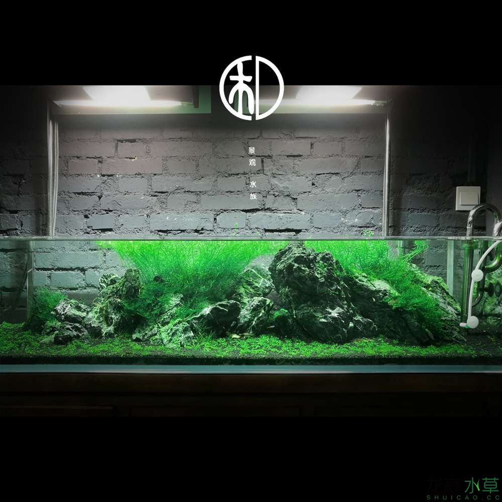 一米五矮缸水草造景