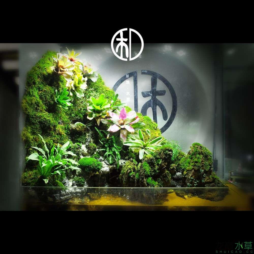 一米四雨林造景