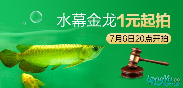 水幕金龙1元起拍.png