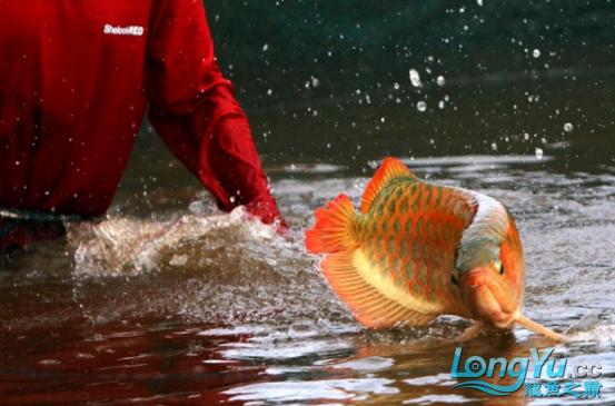 御龙渔业龙颠超级访问2682.png