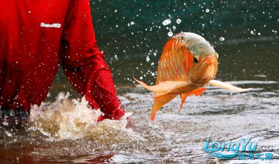 御龙渔业龙颠超级访问2683.png