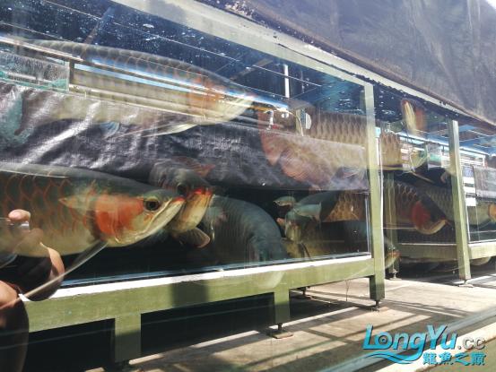 御龙渔业龙颠超级访问2684.png