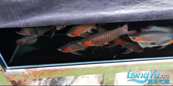 御龙渔业龙颠超级访问2685.png