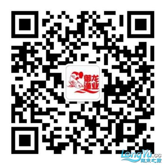 御龙渔业龙颠超级访问2705.png
