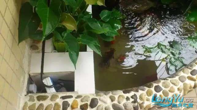 池子4.webp.jpg