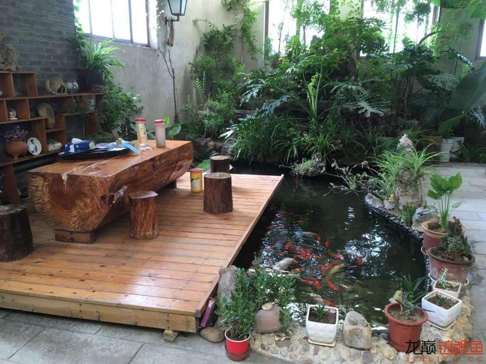 小池全貌,木台、桌、墩也是自己动手制成,成本2000元