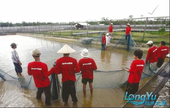 超级访问:印尼IKI集团 (1)(1)947.png