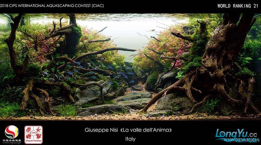 21-Giuseppe Nisi Italia.jpg