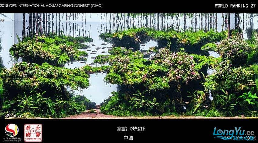 27 高鹏 中国.jpg
