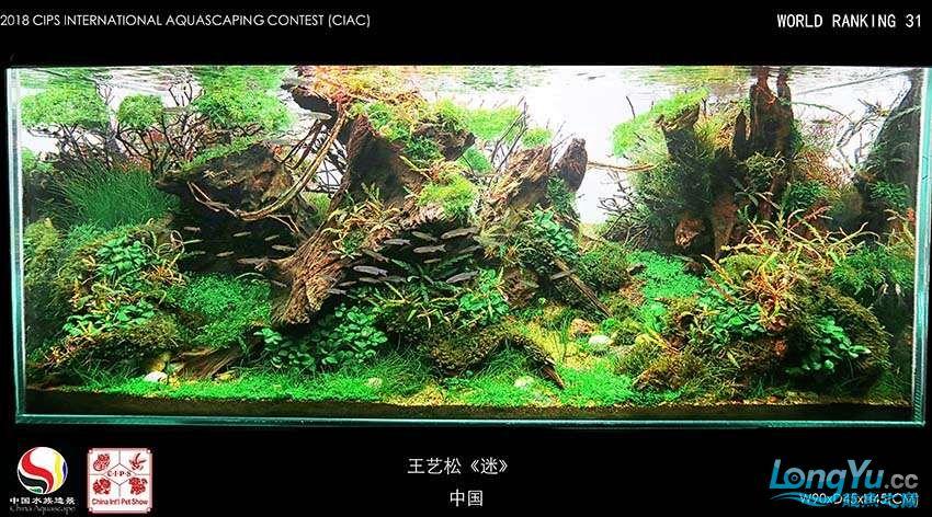 31-542王艺松 中国.jpg