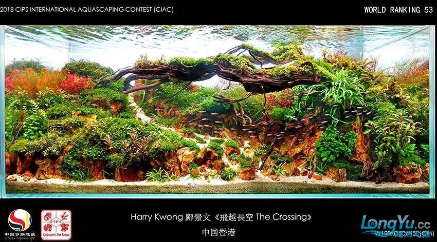 53-Harry Kwong 鄺景文 中国香港.jpg