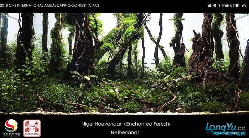 69-Nigel Hoevenaar  Netherlands.jpg