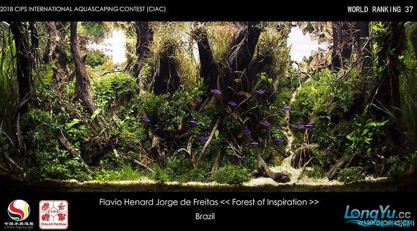 37-Flavio Henard Jorge de Freitas Brasil待定.jpg