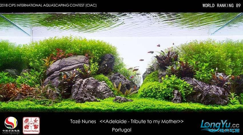 89 Tozé Nunes Portugal.jpg