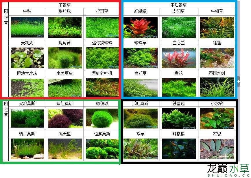 水草分类.JPG