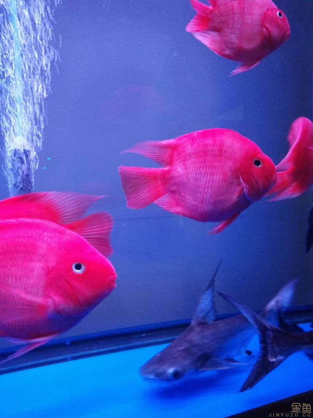 鱼身有点发白