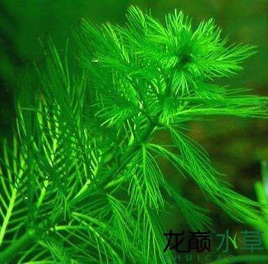绿羽毛.jpg