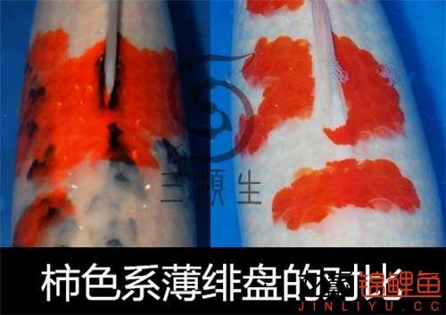20071219_7b5ce5e101401cc9d542dR8NvbFiVvBn_副本_副本.jpg