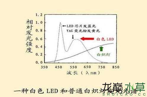 伪白光LED与白炽灯光谱对比.jpg