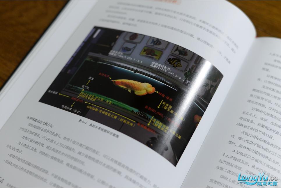首期发行你有一本龙鱼魟鱼饲养手册待领取 营口龙鱼论坛 营口龙鱼第8张