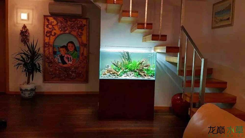 楼梯间水草缸3.jpg
