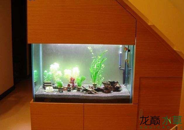 楼梯间水草缸5.jpg