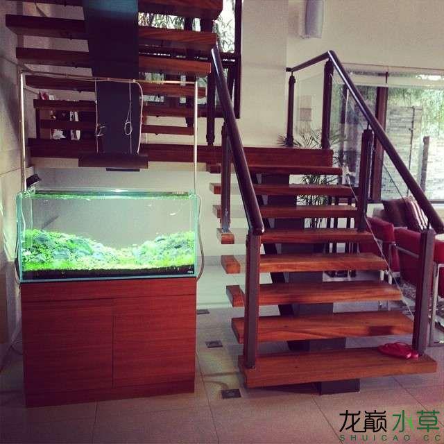 楼梯间水草缸9.jpg