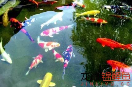 大热天的锦鲤爱吃什么呢?3.png