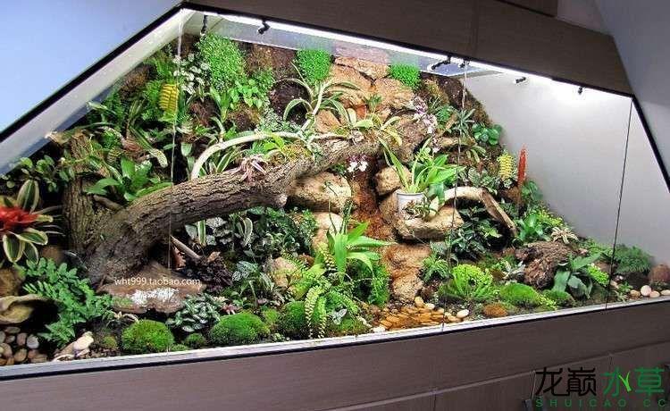 阁楼雨林缸2.jpg